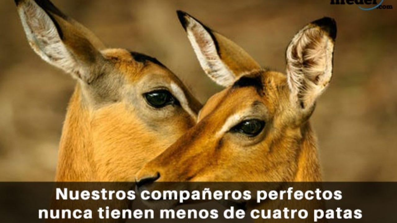 Las 100 Mejores Frases De Animales Y Mascotas Lifeder