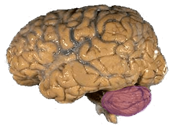 looking at brain tumors psychology essay Free brain tumors papers, essays, and research papers  a brief look at the  physiological basis and neurological effect of brain tumors - a brief look at the  physiological basis and neurological effect  [tags: education, brain,  psychology.