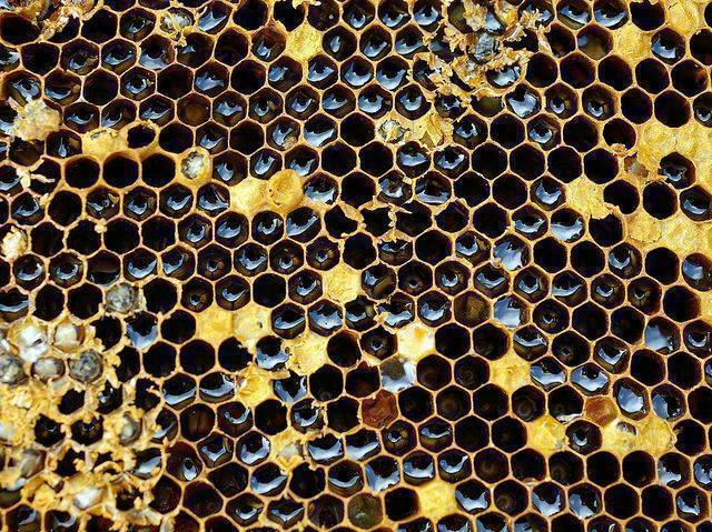 panel of bees