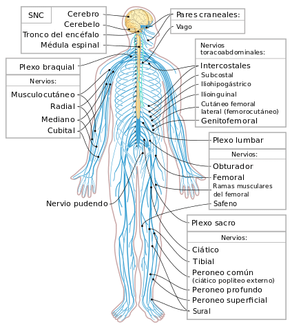 Lead Compounds from Medicinal Plants for