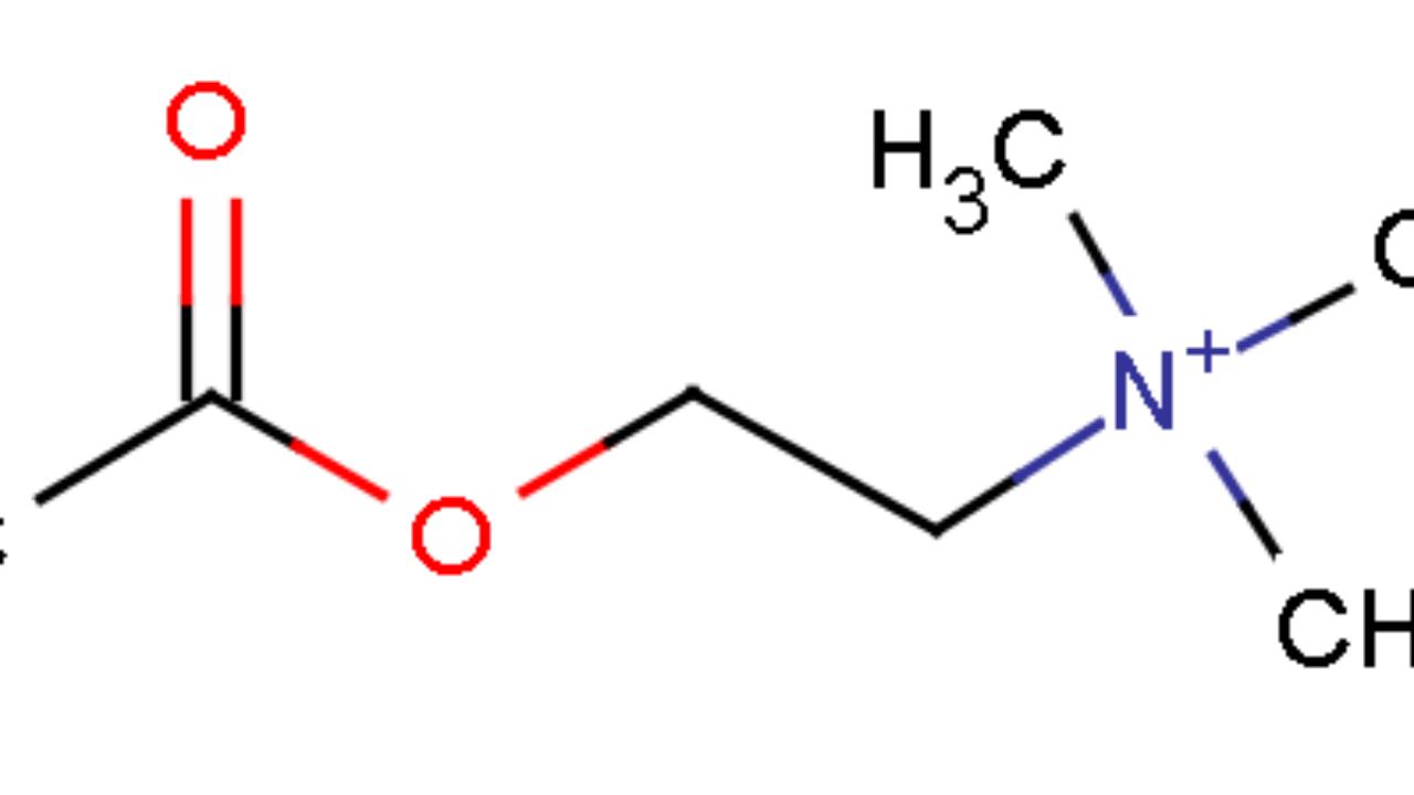 Acetilcolina Funciones Síntesis Mecanismo De Acción Lifeder