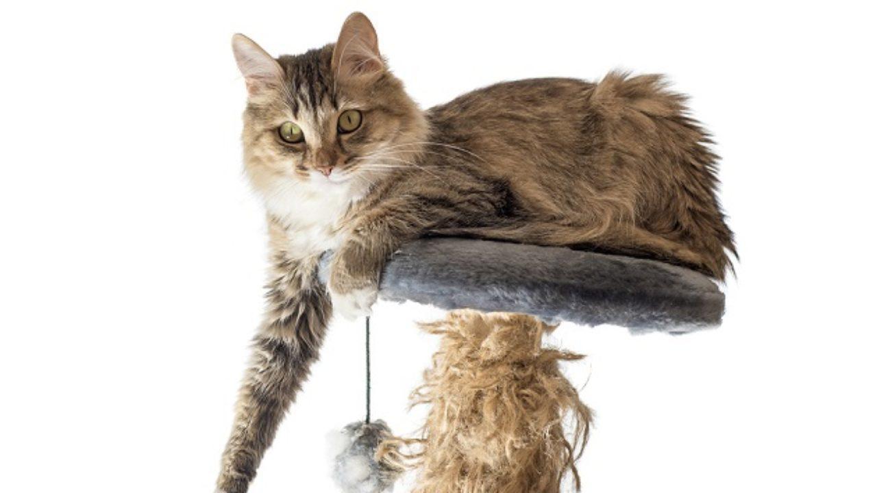 Las 100 Mejores Frases De Gatos Lifeder