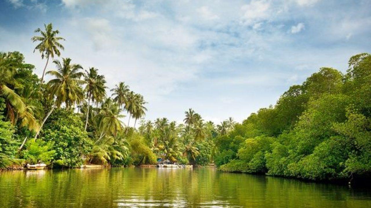 Selva Ecuatorial Clima Vegetación Fauna Y Regiones Lifeder