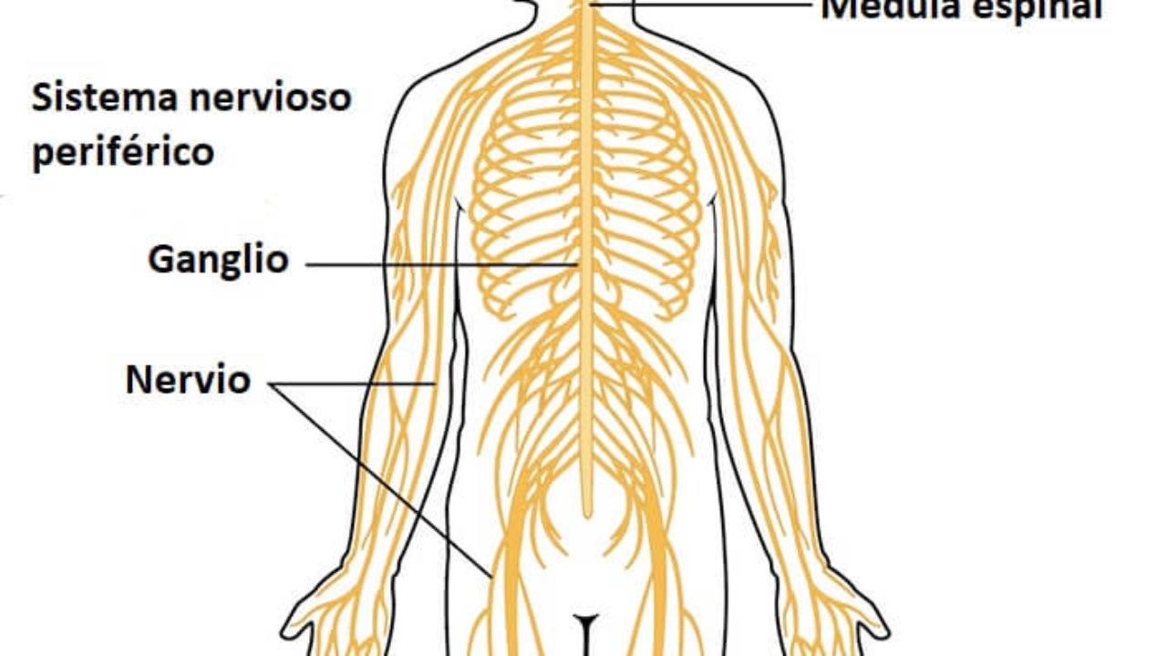las enfermedades mas importantes del sistema nervioso
