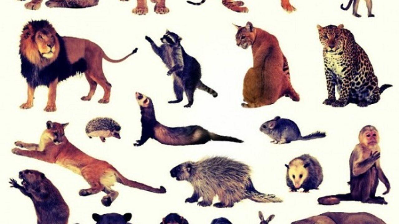 Animales Terrestres Definición Características Y Tipos Lifeder