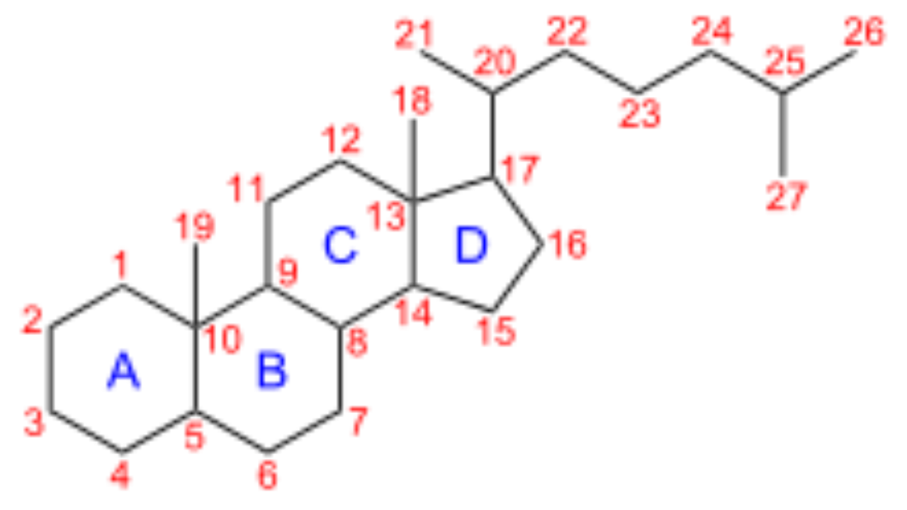 Ciclopentanoperhidrofenantreno Estructura E Importancia