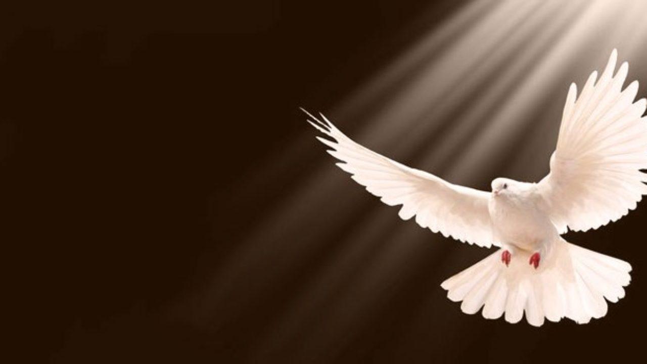 10 Manifestaciones Del Espíritu Santo En La Biblia Lifeder