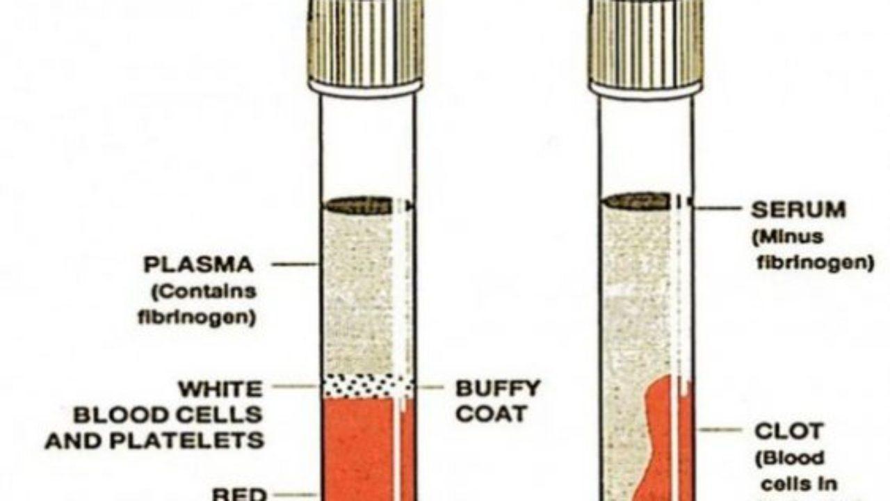 que contiene suero sanguineo