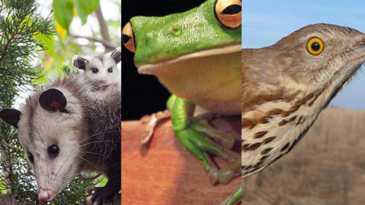 20 Animales Que Respiran Por Pulmones Respiración Pulmonar