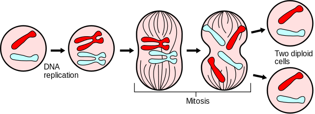 Mammal asexual reproduction pictures