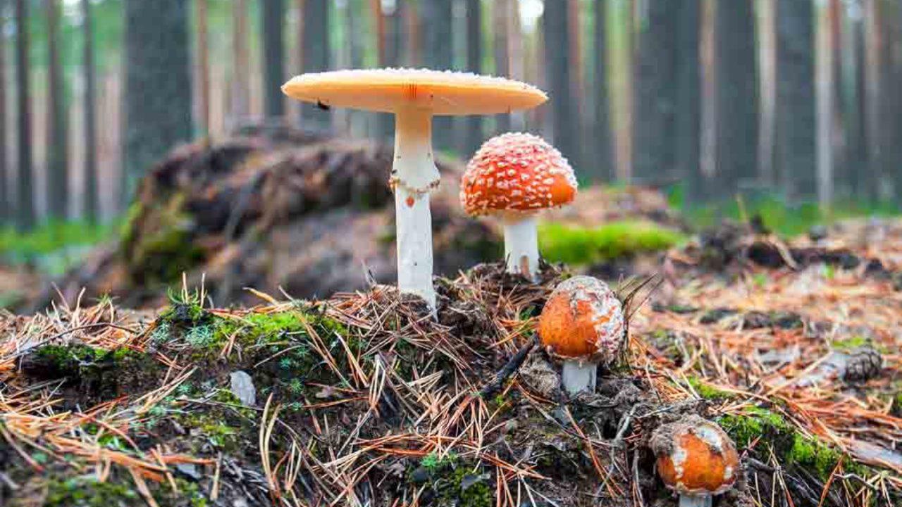 los 22 tipos de hongos mas comunes y sus caracteristicas