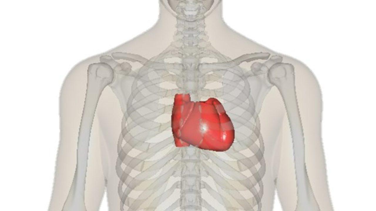 que organo del cuerpo humano se encuentra del lado izquierdo