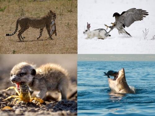 que significa depredacion en ciencias naturales