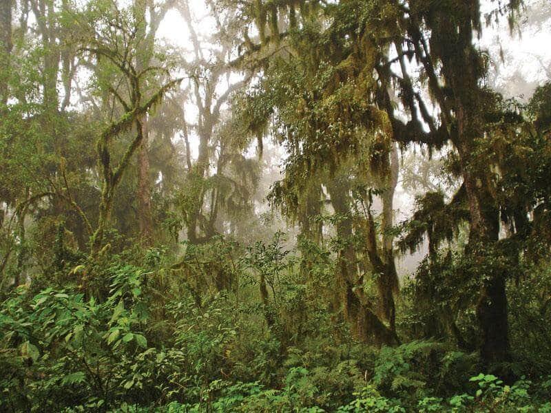 Bosque Nublado Flora Fauna Clima Y Caracteristicas Lifeder