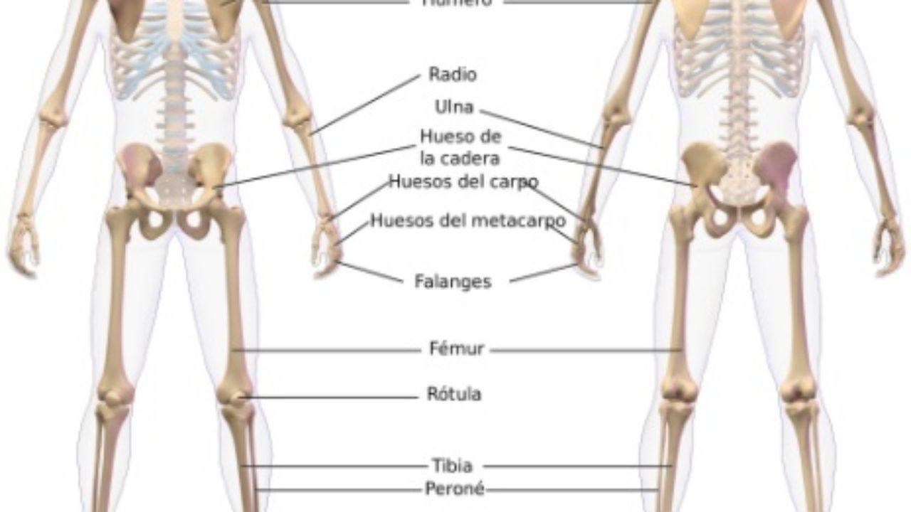 cuales son los huesos que componen la cadera