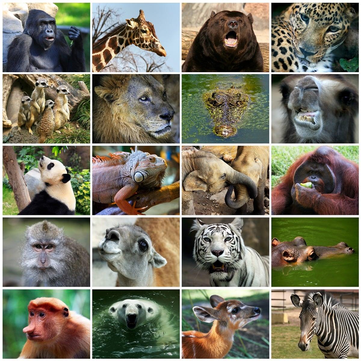 Reino animalia: características, ejemplos, tipos ...