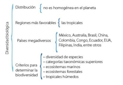 Cuadro Sinóptico Características Elaboración Tipos Lifeder