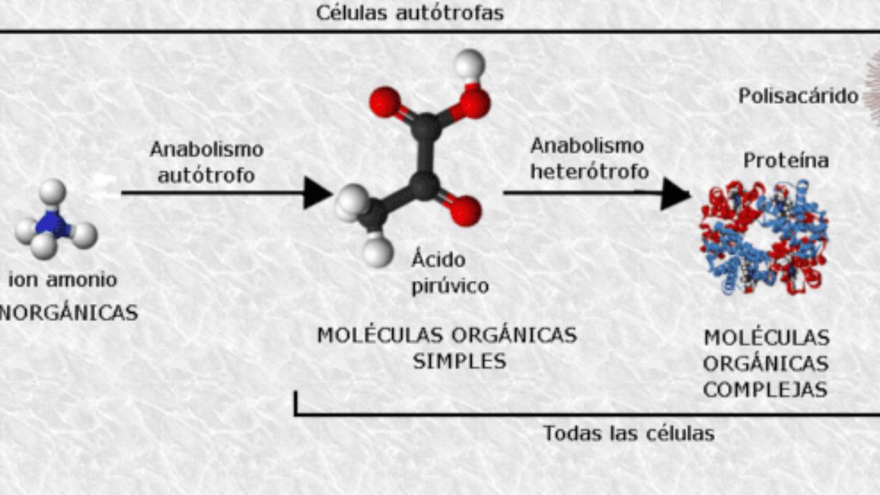 moléculas inorgánicas agua y sales minerales