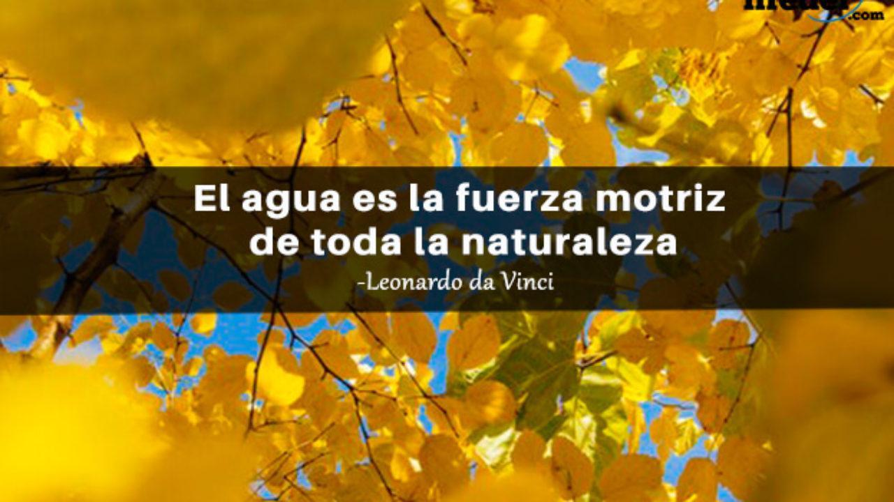 Las 95 Mejores Frases De La Naturaleza Lifeder