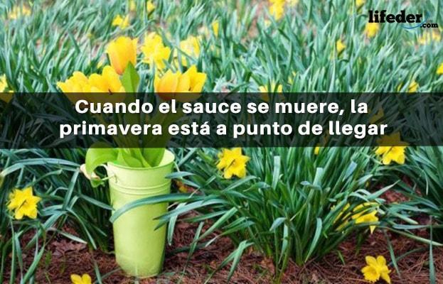 65 Bonitas Frases De Marzo Lifeder