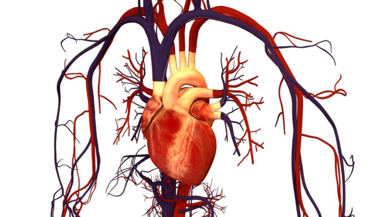 Controlar los barorreceptores de la presión arterial