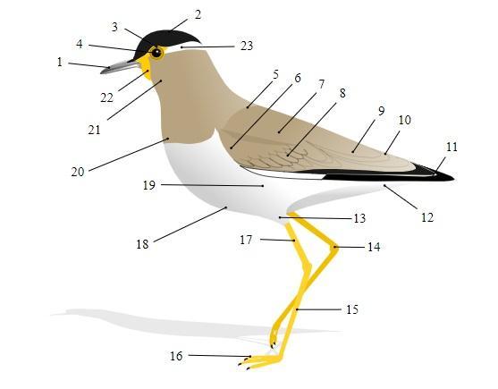 Sistema Digestivo De Las Aves Partes Y Funciones Lifeder