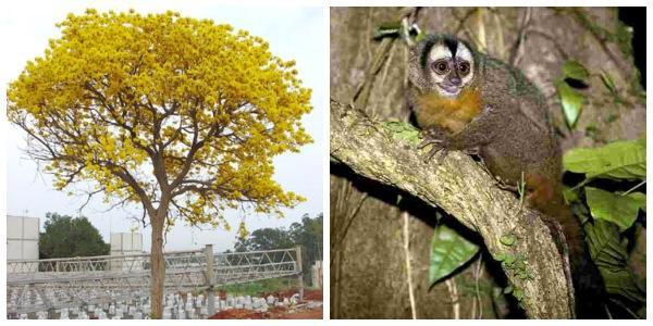 Flora y fauna de Santiago del Estero: especies principales - Lifeder