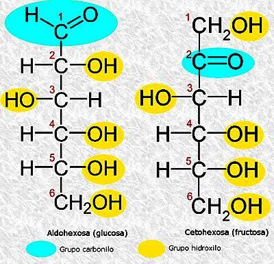Aldohexosa Estructura Molecular Y Ejemplos Lifeder