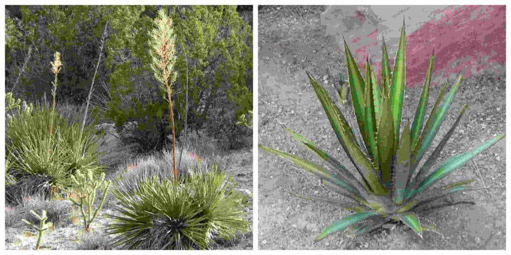 20 Plantas Del Desierto Y Sus Características
