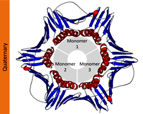 Estructura Cuaternaria De Las Proteínas Características
