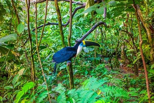 Selva Tropical Flora Fauna Características Clima