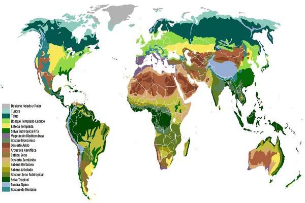 Tipos De Ecosistemas Y Sus Características