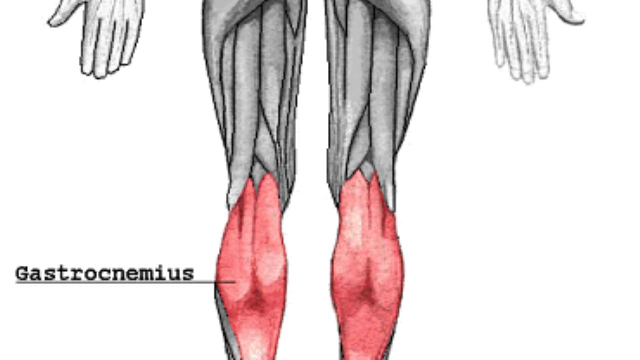 musculo gastrocnemio origen insercion y funcion