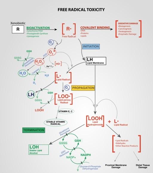 Cosas que puede hacer a metabolismo insulina con resultados excepcionales Cada vez
