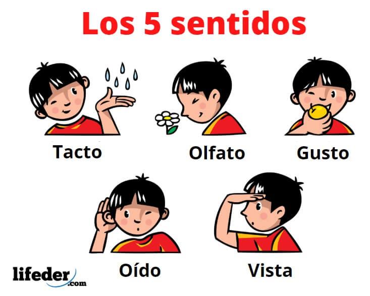 Los 5 Sentidos Y Sus Funciones